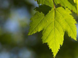 leaf-1789302_640